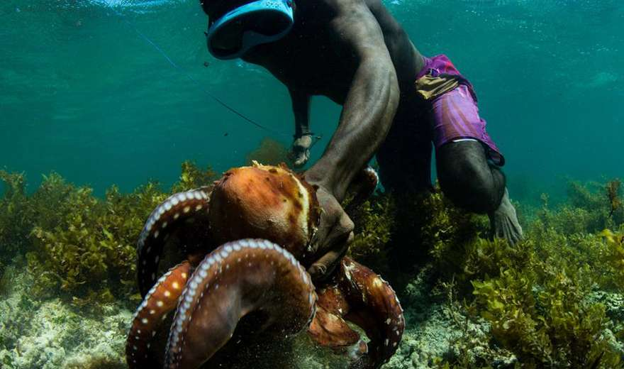 Community Octopus Reserves In Madagascar For Food and Economic Sovereignty