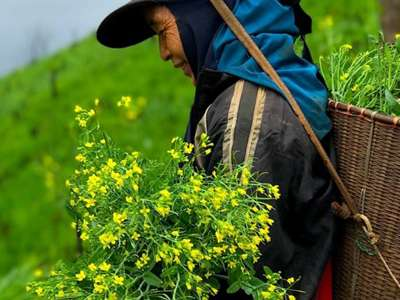 Indigenous Peoples and Food Security
